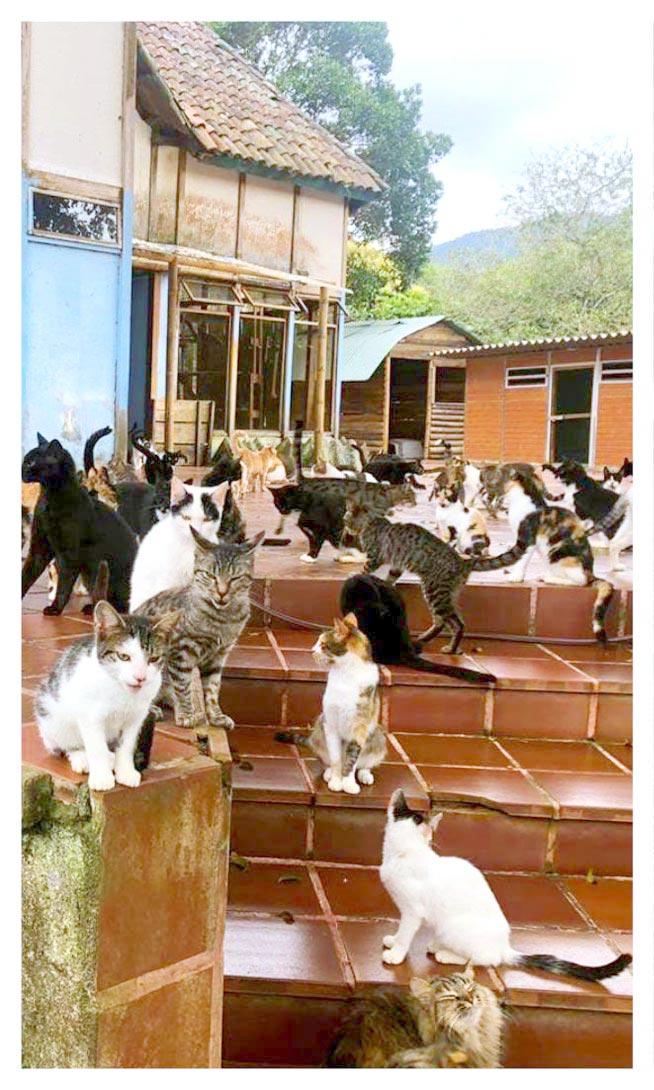 Zona Felina albergue PAZANIMAL Cali Colombia